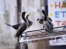 Birds Perching On Rusty Metal