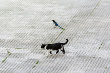Stray Cat And Magpie Ignoring Each Other, Magpie Disguises, But The Cat Must Have Eaten Already