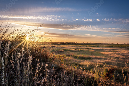 Fotografie, Obraz Golden hour landscape of wild grass flowing in the wind in the wetlands of the Cosumnes River Preserve in Galt California with the sun setting on the horizon