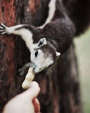 Cropped Image Of Person Feeding Squirrel On Tree