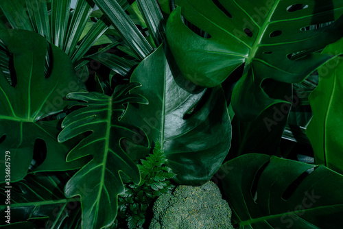 Fototapety, obrazy: Monstera green leaves or Monstera Deliciosa in dark tones(Monstera, palm, rubber plant, pine, bird's nest fern), background or green leafy tropical pine forest patterns for creative design elements.