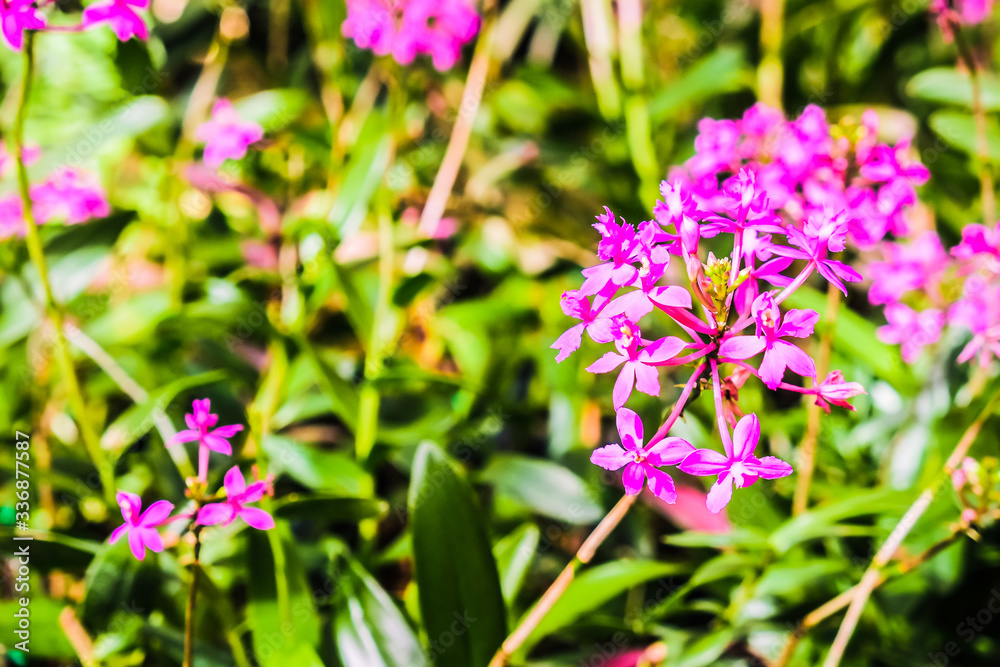 beautiful flower with garden background