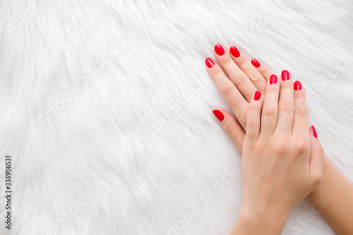 Fototapeta Beautiful groomed woman hands with red nails on light white furry background