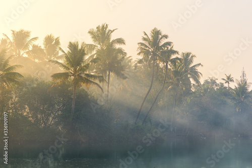 Fotomural Jungle of palm trees with atmospheric haze at sunset, along a freswater lake in