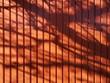 canvas print picture - Schatten der Äste eines Baumes vor einem Garagentor aus Stahl in Orange in Oerlinghausen bei Bielefeld im Teutoburger Wald in Ostwestfalen-Lippe