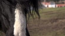 Close Up Of Welsh Pony Face And Mane UK 4K