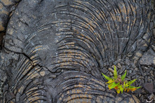 The Texture Of Hardened Lava Rock