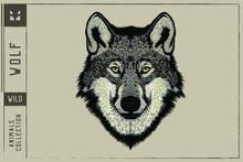 Wolf Head Vector Illustration ...