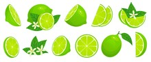 Cartoon Lime. Limes Slices, Gr...