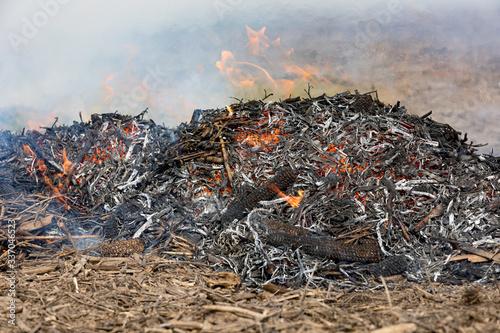 Valokuvatapetti Soybean stubble, cornstalks and corn cobs burning in farm field