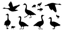 Gosling And Goose Silhouettes