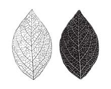 Hand Drawn Leaf. Detailed Leaf...