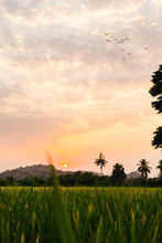 Sunset From Green Rice Farms, ...
