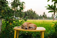 Cute Street Dog Sleeping On A ...