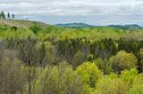 Fototapeta Na ścianę - Forests and hills near black river falls