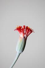 Succulent Plant Flower
