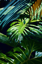 Jungle Plants In A Tropical Greenhouse