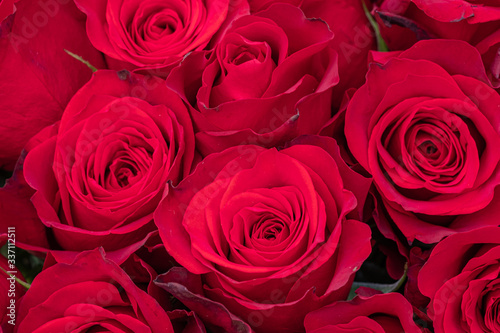 close-up of red roses #337112511