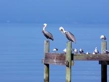 Gray Heron Perching On Pier Over Sea