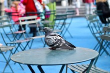 Close-up Of Pigeon Perching On Table At Sidewalk Cafe
