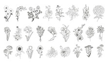 Vector Set Flowers Illustratio...