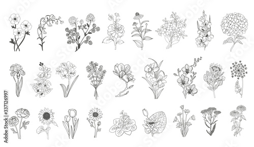 Fotografie, Tablou Vector set flowers illustration