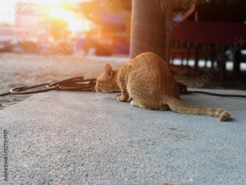 Fotografie, Obraz Ginger Cat By Footpath