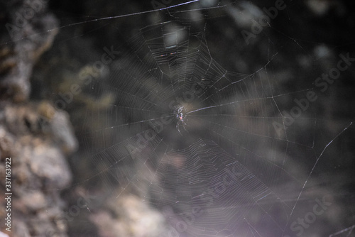 Canvas Close-up Of Spider And Web Against Blurred Background