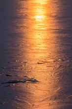 Swan In Sea At Sunset