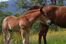 Cute Baby Foal Horse With Mom ...