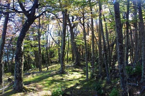 Pine Trees In Forest © steven garcia/EyeEm