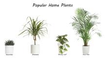 Set Of Popular House Plants On...