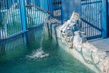 Polar Bear Cage In The Zoo.