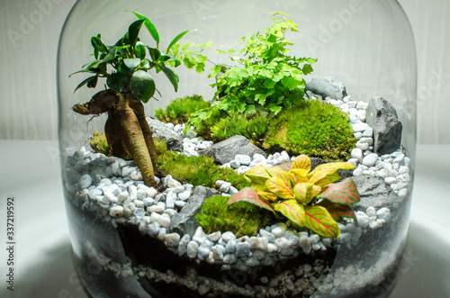 Fotografering beau terrarium jardin d'intérieur