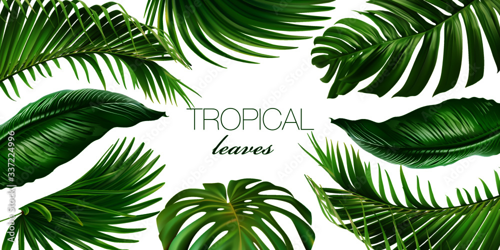 Fototapeta Vector horizontal tropical leaves banners on white background. Exotic botanical design for cosmetics, spa, perfume, health care products, aroma, wedding invitation. Web banner
