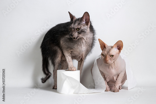 Photo Cats with toilet paper