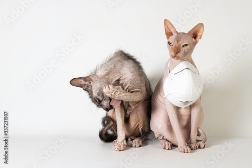 Photo Wear mask and wash hands cats