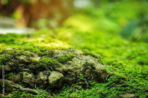 Fotografia, Obraz Beautiful Bright Green moss grown up cover the rough stones and on the floor in the forest