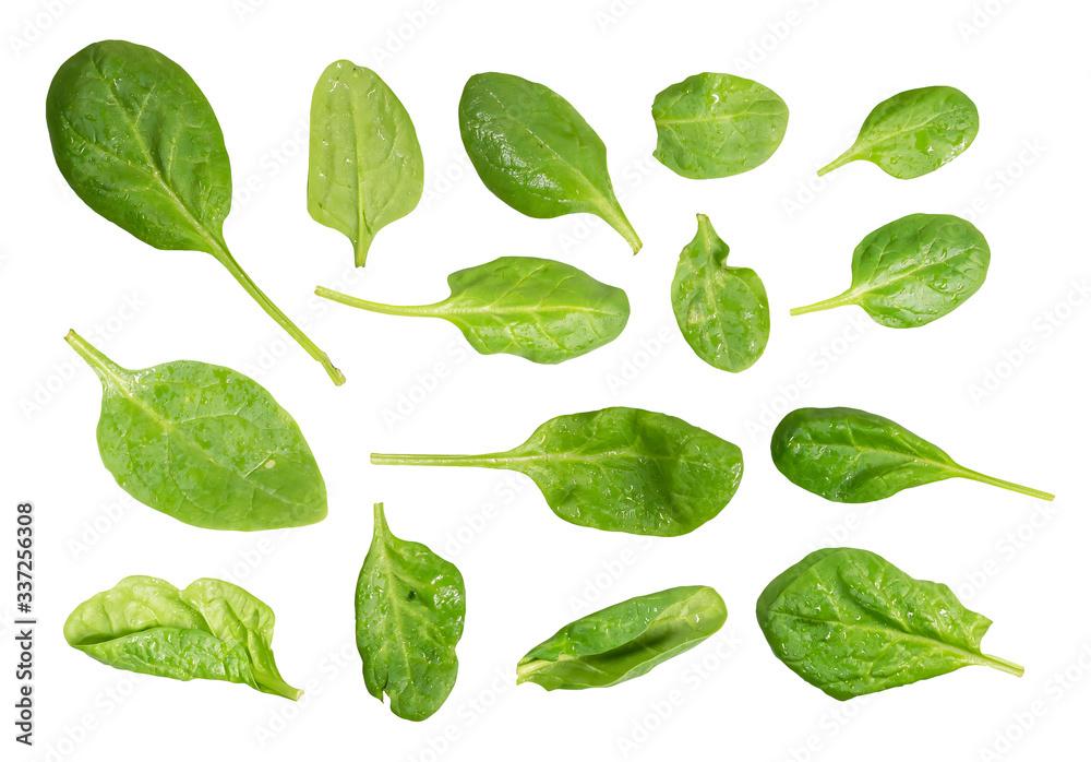 Fototapeta bazylia na białym tle biały liść tło świeży zioło zielony przyprawa organiczny szczyt widok ponad składnika jedzenie zdrowy roślina liść ziołowy zbliżenie surowy eteryczny naturalny wegetariańska natu