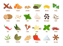 Set Of Spices Vector Isolated....