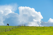 Green Farmland With Black-and-...