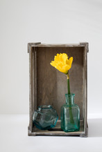 Narcissus In The Bottles Instead Vase And Two Pears In An Inverted Grey Wooden Decorative Box On A White Background. Copy Space