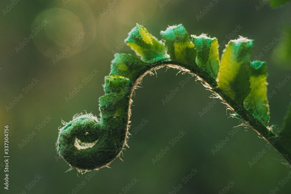 Fototapeta Closeup shot of a green fern with blurred background