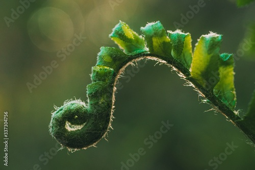 Obraz na plátně Closeup shot of a green fern with blurred background
