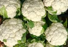 Cauliflower Vegetable Cauliflo...