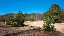 Sand Strips In The Forest On The Former Inner German Border In Schildow, Brandenburg, Germany