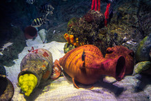 Yellow Muraena Escapes From Th...