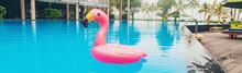 Circle In A Flamingo Pool. Sel...