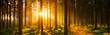 Leinwandbild Motiv Pine Trees In Forest During Sunset