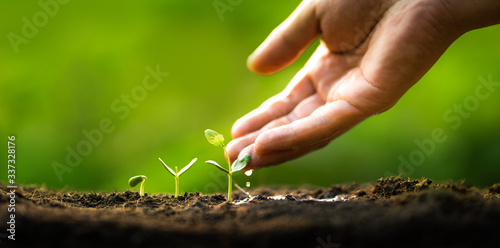 Three saplings are growing on the soil and a natural green background Fotobehang